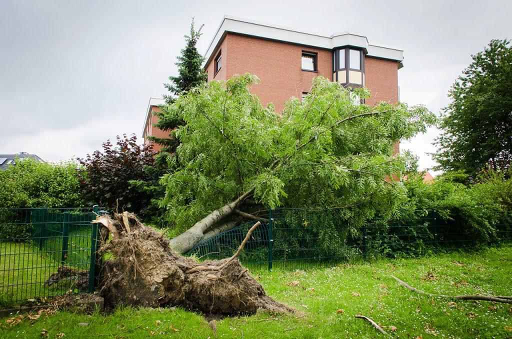 Strumschaden, umgestürzter Baum liegt auf Zaun